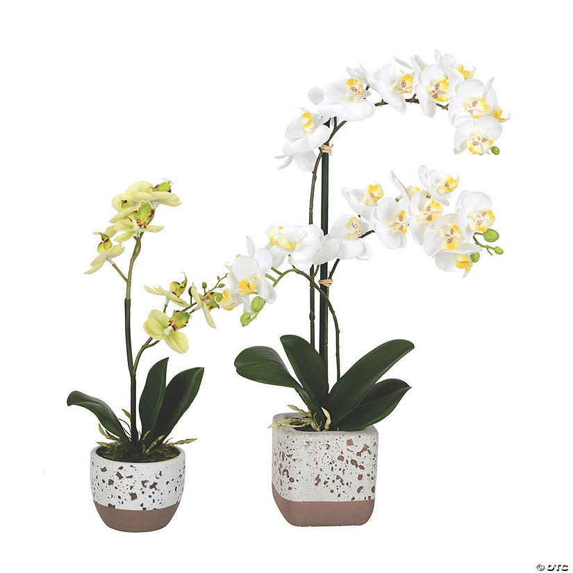 "Vickerman 13.5"", 18"" Artificial Mini White Phalaenopsis, Set Of 2, Real Touch Petals Audio Thumbnail"