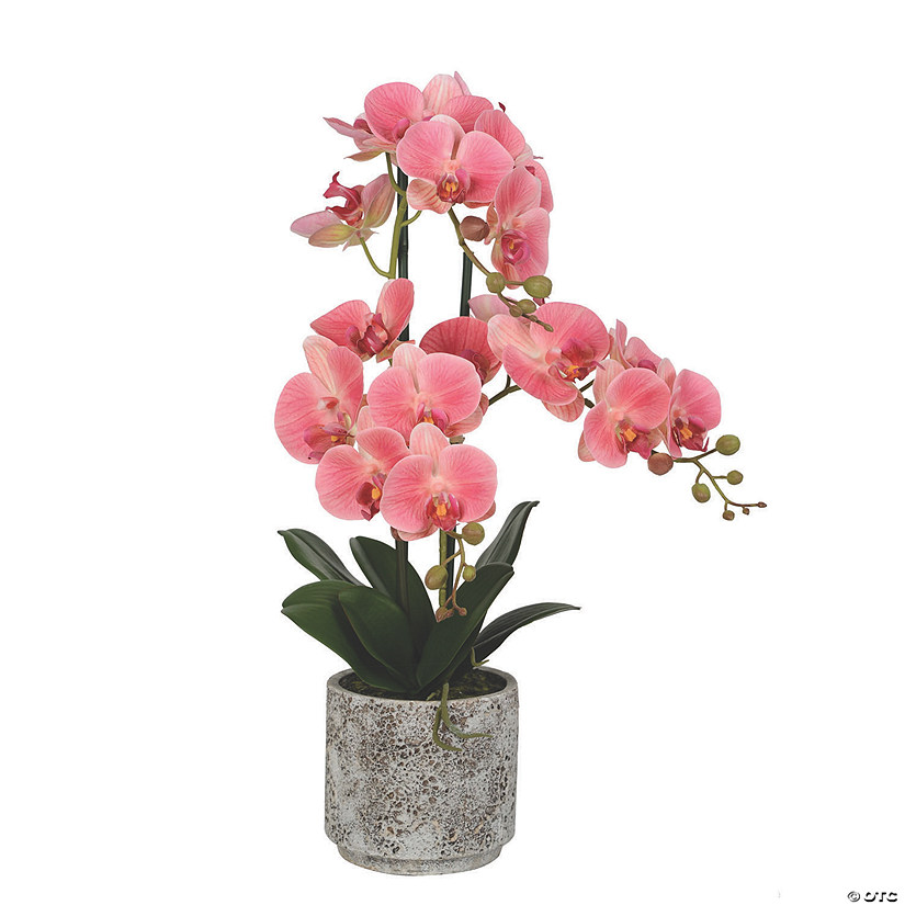 "Vickerman 24"" Artificial White Phalaenopsis In Cement Pot, Real Touch Petals Audio Thumbnail"