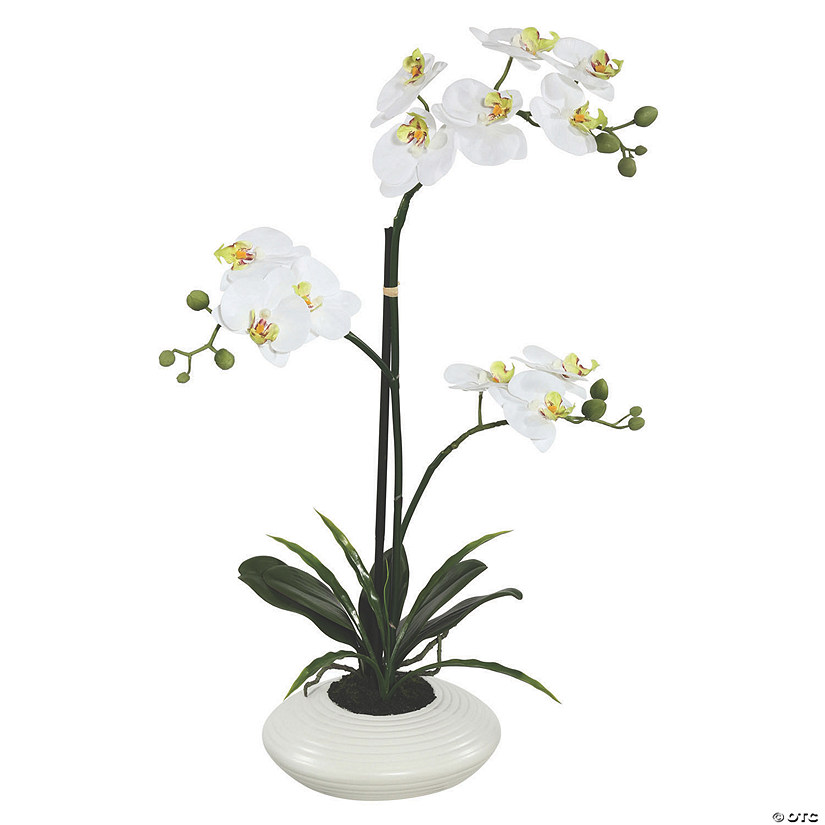 "Vickerman 25"" Artificial White Orchid Audio Thumbnail"