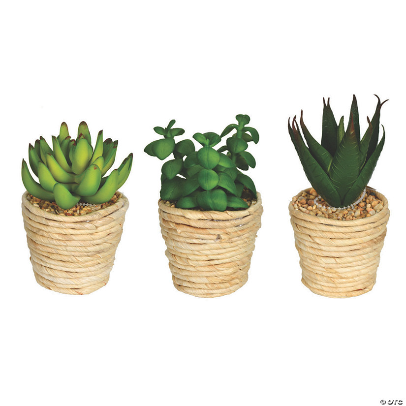"Vickerman 5"" and 6"" Assorted Potted Succulents - 3/pk Audio Thumbnail"