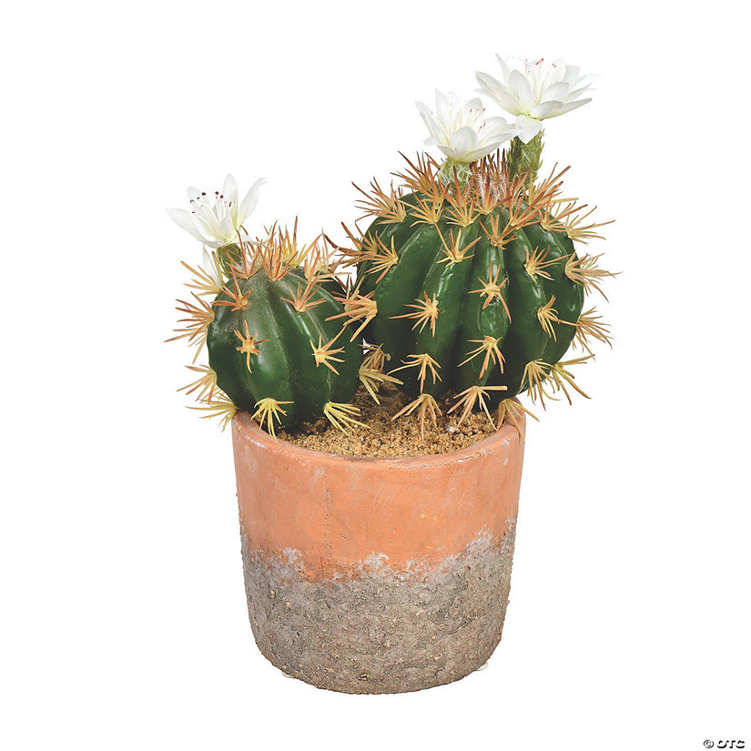 "Vickerman 9"" Green Cactus in Clay Pot Audio Thumbnail"