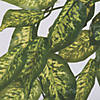 "Vickerman 24"" Artificial Green Dieffenbachia Bush Vine - 2/pk Image Thumbnail 2"