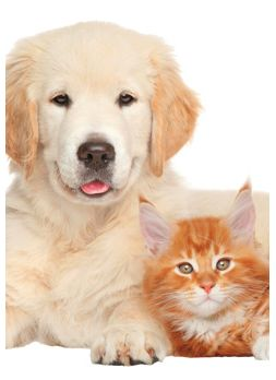 Save On Hundreds of Pets Supplies