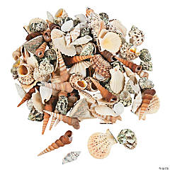 10 Lb. Decorative Sea Shell Assortment
