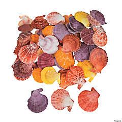 Dyed Pecten Nobilis Sea Shells