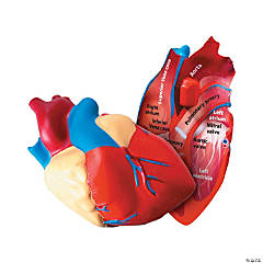 Learning Resources® Cross-Section Human Heart Model