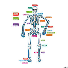 Magnetic Human Skeleton