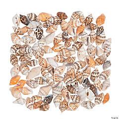 Mini Shell Beads