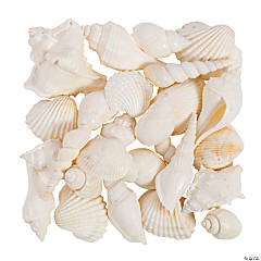 Mixed Large White Sea Shells