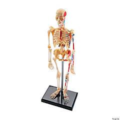 Model Skeleton