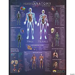 Popar Human Anatomy Interactive Wall Chart