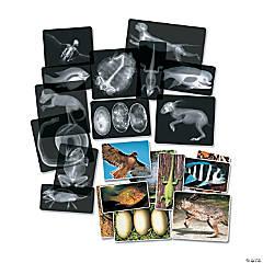 Roylco® Animal X-Ray Set, 14 per pack