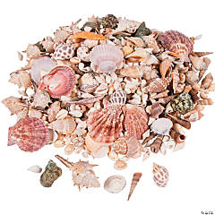 Sea Shell Assortment
