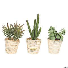 "Vickerman 5""  Potted Succulent Cactus Plants - 3/pk"