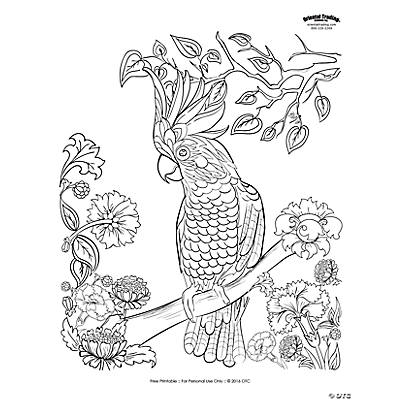 Parrot Scene Adult Coloring Page Free Printable