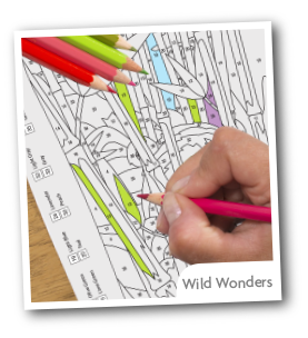 Wild Wonders  Color by Number Book Set